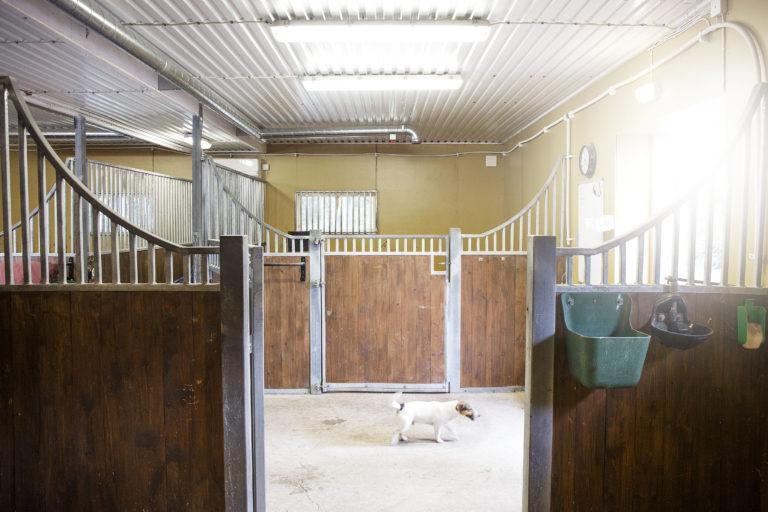 Hyresgästernas stall del och Humle i stallgången