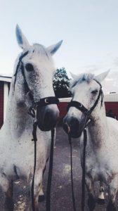 Curran och Sparven på meeting i Grevagården, ser ut som en kopia av varandra